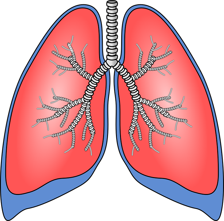 Study Describes The Good And Bad Lung Bacteria In Cystic Fibrosis